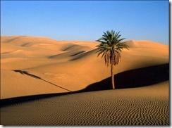 desert d'egipte